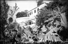 Quinta Saudade, Freguesia do Imaculado Coração de Maria, Concelho do Funchal