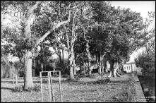 Jardim e edifício, em local não identificado