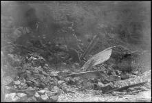 Derrocada de pedras, em local não identificado, na Ilha da Madeira