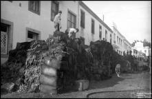 Tabaco em rama retirado do incêndio da casa Leacock, na rua 5 de Junho (atual rua Major Reis Gomes), Freguesia de São Pedro (atual Freguesia da Sé), Concelho do Funchal