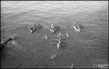 Elementos da Polícia de Segurança Pública a praticar remo e surf, na praia da Barreirinha, Freguesia de Santa Maria Maior, concelho do Funchal