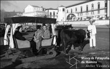 Escritor Gilberto Freyre num carro de bois na avenida do Mar (atual avenida do Mar e das Comunidades Madeirenses), Freguesia da Sé, Concelho do Funchal